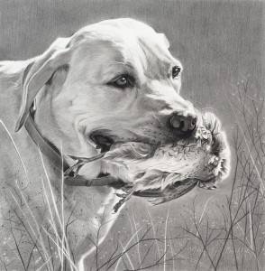 Mary Ross Buchholz, A Soft Mouth, charcoal/graphite, 13 x 13.