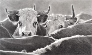 Mary Ross Buchholz, Matriarchs of the Range, charcoal/graphite, 13 x 23.