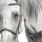 Mary Ross Buchholz, Silver Clover, charcoal/graphite, 11 x 15.