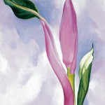 Georgia O'Keeffe, Pink Ornamental Banana, 1939, oil on canvas, 19 x 16. Collection of James M. Rosenfield in memory of Lois F. Rosenfield.