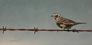 Robert Louis Caldwell, Woolaroc Visitor (lark sparrow), oil, 8 x 16.