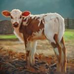 Teresa Elliott, Daybreak, oil, 30 x 36.