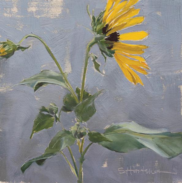 Stephanie Hartshorn, Wednesday's Cutting, oil, 12 x 12.