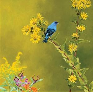Mark Eberhard, Indigo Bunting, oil, 18 x 18.