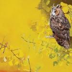 Mark Eberhard, Long-Eared Owl, oil, 24 x 24.