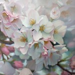 Michael Godfrey, Sweet Fragrance of April, oil, 48 x 36.
