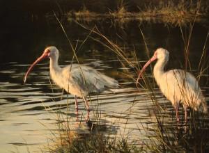 Ralph Grady James, Ibis-in-the-Marsh, oil, 24 x 30.