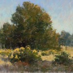 Morning Among the Cottonwoods, pastel, 10 x 12.