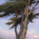 Coastal Cypress, pastel, 16 x 8.
