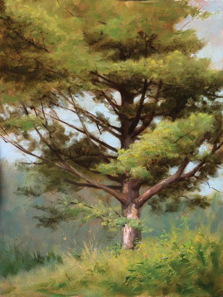 Thomas Kegler, White Pine, White Mountains, oil, 16 x 12.