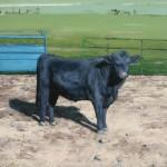 Charley Snow, Buck, oil, 20 x 20.