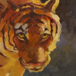 Sarah Webber, Tiger, Tiger Burning Bright, oil, 12 x 12.