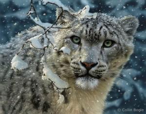 Collin Bogle, Snow Leopard, mixed media, 14 x 11.