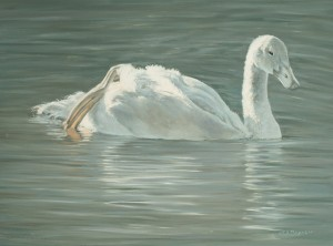 Timothy David Mayhew, Cygnet Solo, 12 x 16.