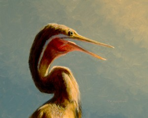 Timothy David Mayhew, Darter, oil, 8 x 10.