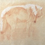 Timothy David Mayhew, Right side study of a gray wolf wading in water, natural red chalk and natural white chalk, 10 x 13.