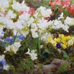 Kathy Anderson | Spring Rainbow, oil, 26 x 36.