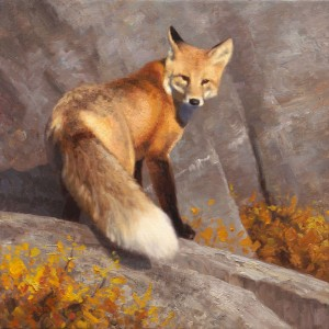 Kyle Sims | A Fox on the Rocks, oil, 24 x 24.