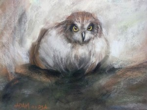 Adam Kelley, Snow Owl, pastel, 13 x 15.