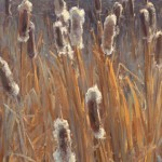 Clyde Aspevig, Cattails, oil, 30 x 18.