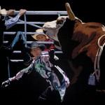 Bull Rush, pastel, 24 x 30.
