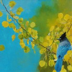 Mark Eberhard, Steller's Jay, oil, 18 x 26.