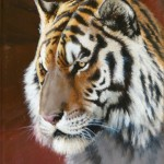 Guy Coheleach, Tiger Head Sketch, oil, 12 x 9.