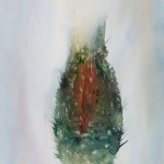 Peter Krusko, Closed Thistle, watercolor, 30 x 22.