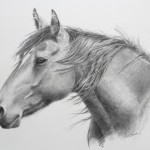 Lorrie Beck, The Mustang, pencil, 13 x 17.