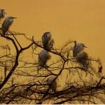 Cypress Skies by Billy-Jack Milligan