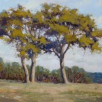 Robert Rohm, Parkland Trees, oil, 16 x 20.