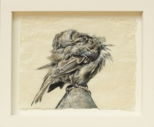 Pete Zaluzec | Preening Sparrow, gampi paper/archival ink, 17 x 14.