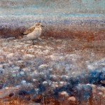Ewoud de Groot, Resting Plover Number 1, oil, 32 x 32.