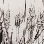 Cathy Trachok, Cattails in the Fall, graphite, 22 x 30.