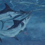 Stanley Meltzoff, White Marlin 7, Three White Marlin and Needlefish, oil, 21 x 32.