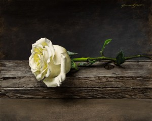 Jeremiah J. White, White Rose, oil, 8 x 11.