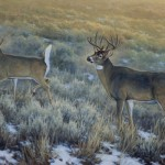 Kasey Nixon, White Tails at First Light, oil, 24 x 36.