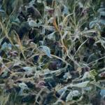Dan Oakleaf, Morning Frost, oil, 11 x 14.